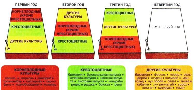 Таблица севооборота овощных культур на огороде: что после чего сажать