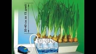 Выращивание лука на перо на гидропонике - agroflora.ru