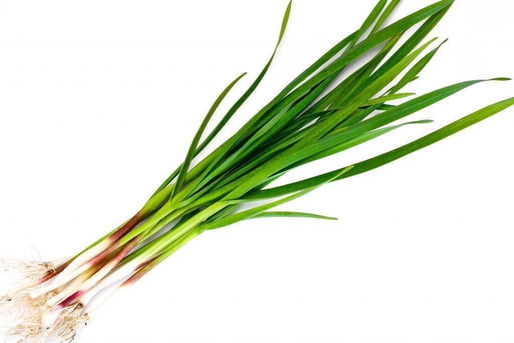 Фитоэстрогены для женщин и мужчин: таблетки, кремы, масла, травы | компетентно о здоровье на ilive