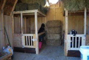 Каким будет оптимальный сарай для коз?