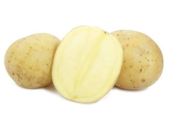Сорт картофеля каратоп: описание с фото, преимущества и недостатки, а также сравнение характеристик с другими видами