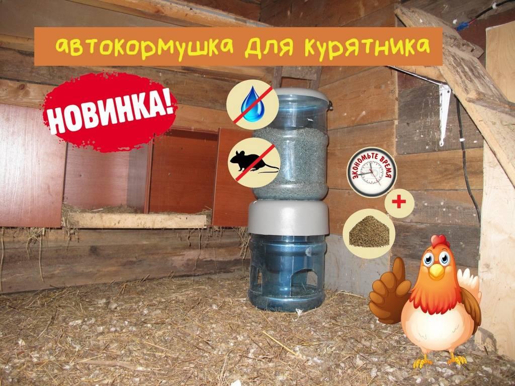 Как сделать кормушку и поилку для домашних птиц своими руками