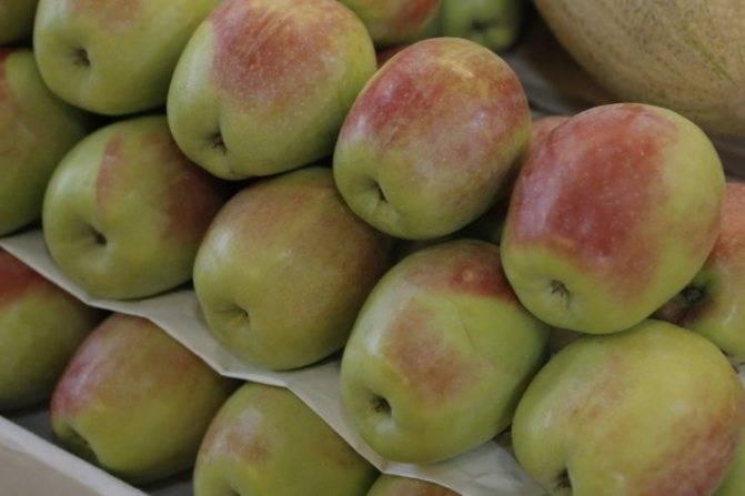 Яблоня северный синап: описание сорта и его фото, характеристики и особенности выращивания selo.guru — интернет портал о сельском хозяйстве