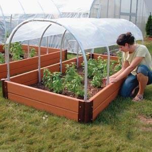 Когда высаживать рассаду в теплицу из поликарбоната: гайд по срокам