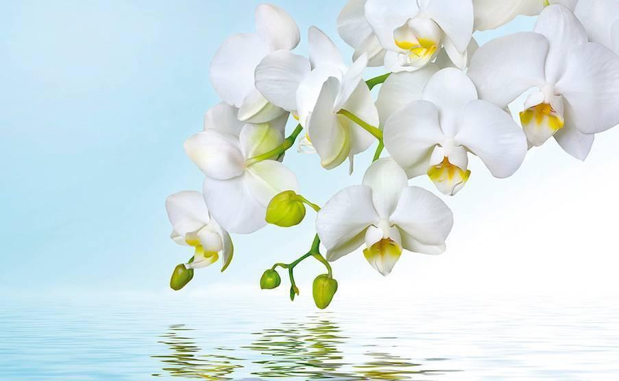Ваша орхидея выпустила цветонос — как ухаживать за ней?