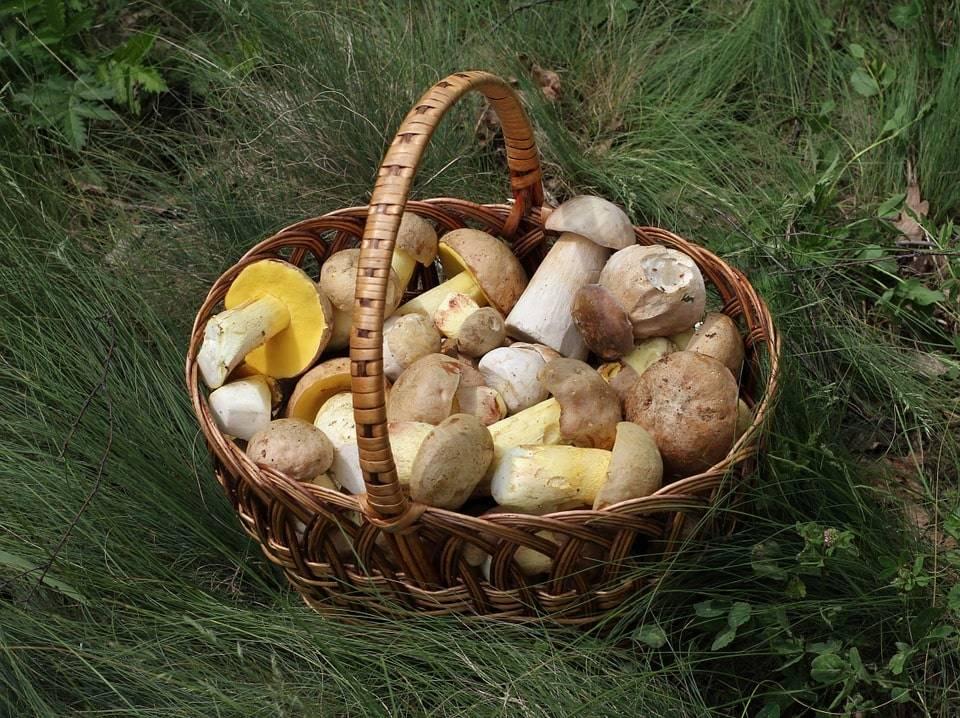 Как вырастить трюфели в домашних условиях - agroflora.ru