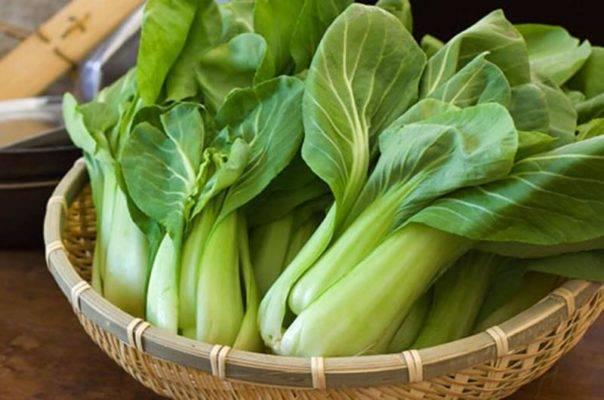 Капуста пак-чой выращивание и уход в открытом грунте, рецепты приготовления + фото