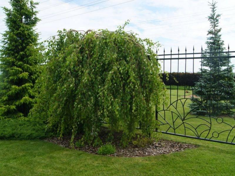 Фруктовые деревья для сада: названия и фото