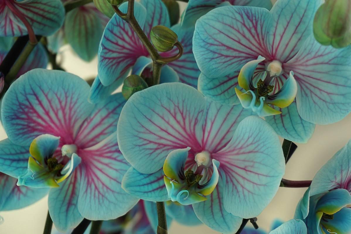 Редкие виды орхидей, различные сорта, цвета в мире, самая редкая, фото и видео от специалистов