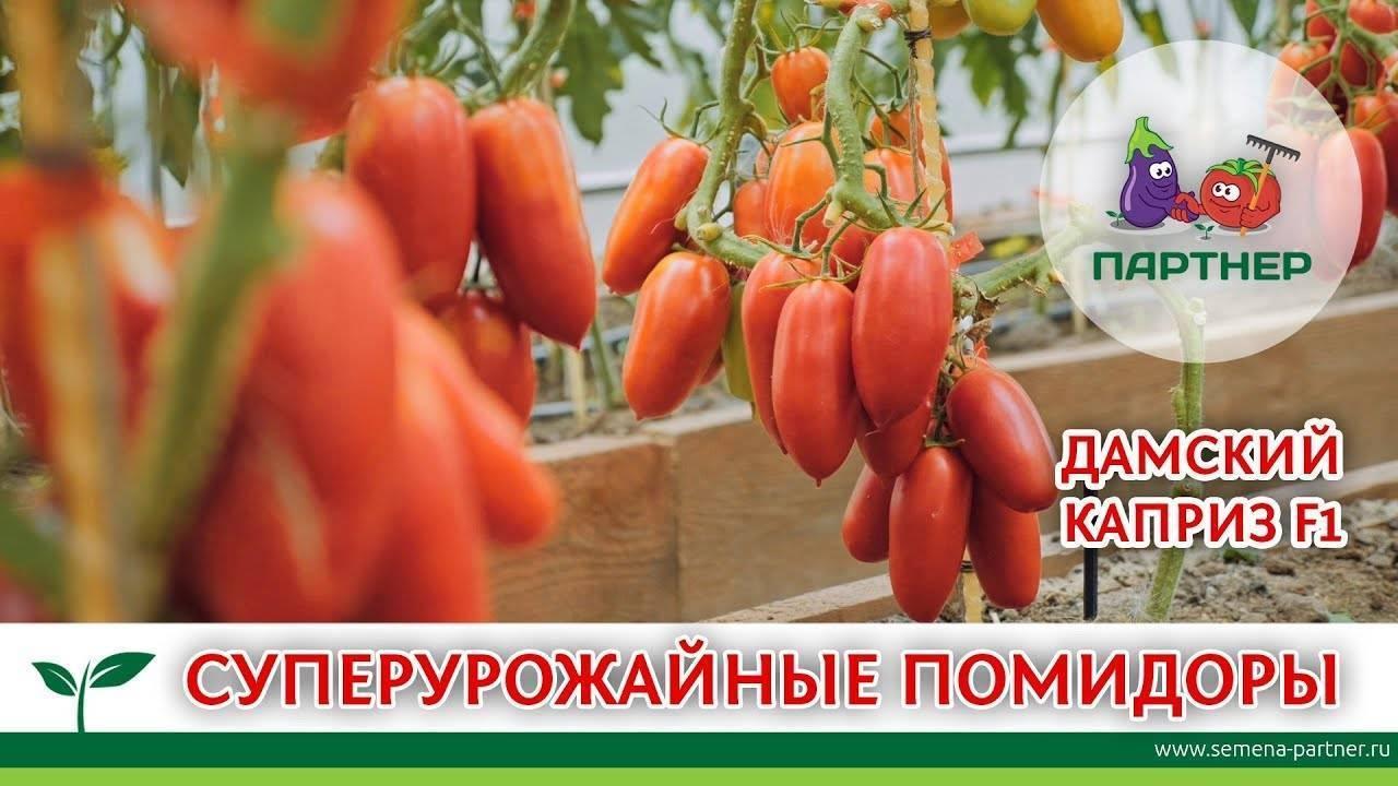 Томат ричи: характеристика и описание сорта, урожайность с фото