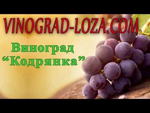 Виноград кодрянка: описание сорта, фото и отзывы, посадка и уход