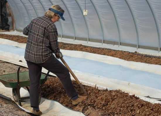 Лучшие сорта огурцов: обзор новых сортов и гибридов огурцов