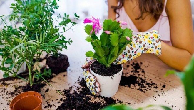 Пересадка комнатных растений: сроки и правила