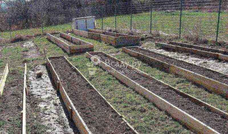 Использование золы и навоза при выращивании моркови