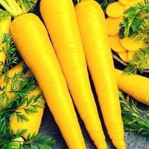Морковь желтая: история селекционирования, польза и вред, химический состав овоща, а также как высаживать и убирать урожай, что любит это растение? русский фермер