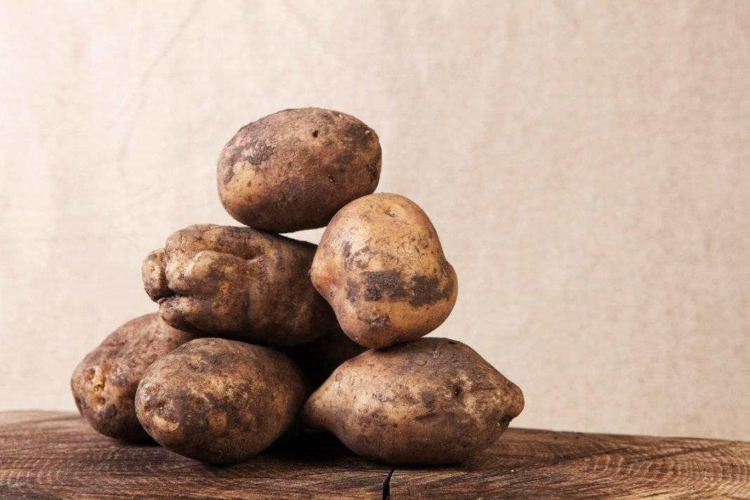 Картофель кемеровчанин: описание сорта, отзывы — selok.info