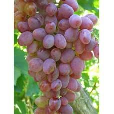 Описание и характеристики сортов винограда кишмиш