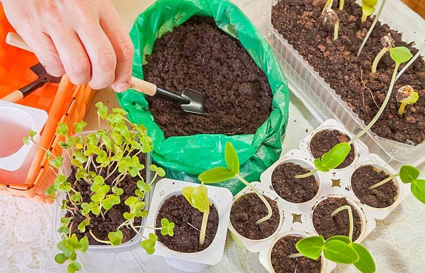 Посев семян в кипяток: как правильно и какие семена можно сеять