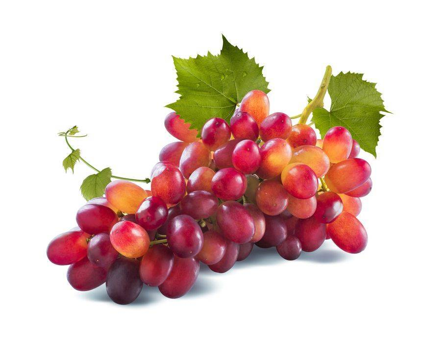 Виноград «юлиан»: описание сорта, фото и отзывы