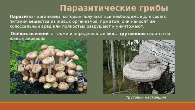 О грибах-паразитах