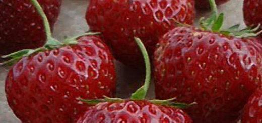 Клубника машенька - посадка, уход и размножение сорта (115 фото)