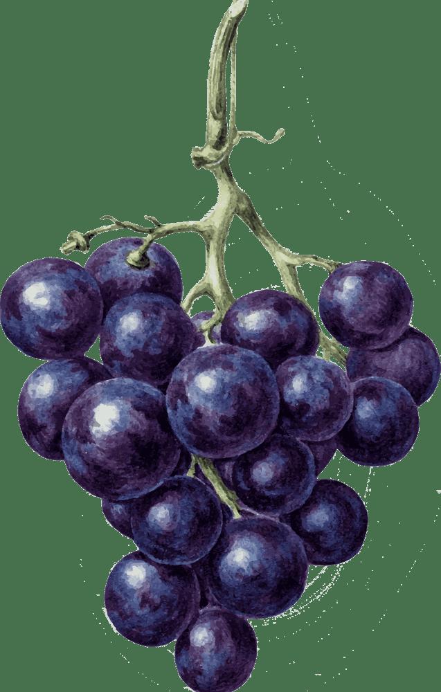 Всё о сорте винограда «кристалл» от особенностей выращивания до фото и отзывов о нем