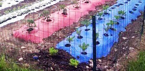 Мульчирование почвы: секреты и правила   огородники
