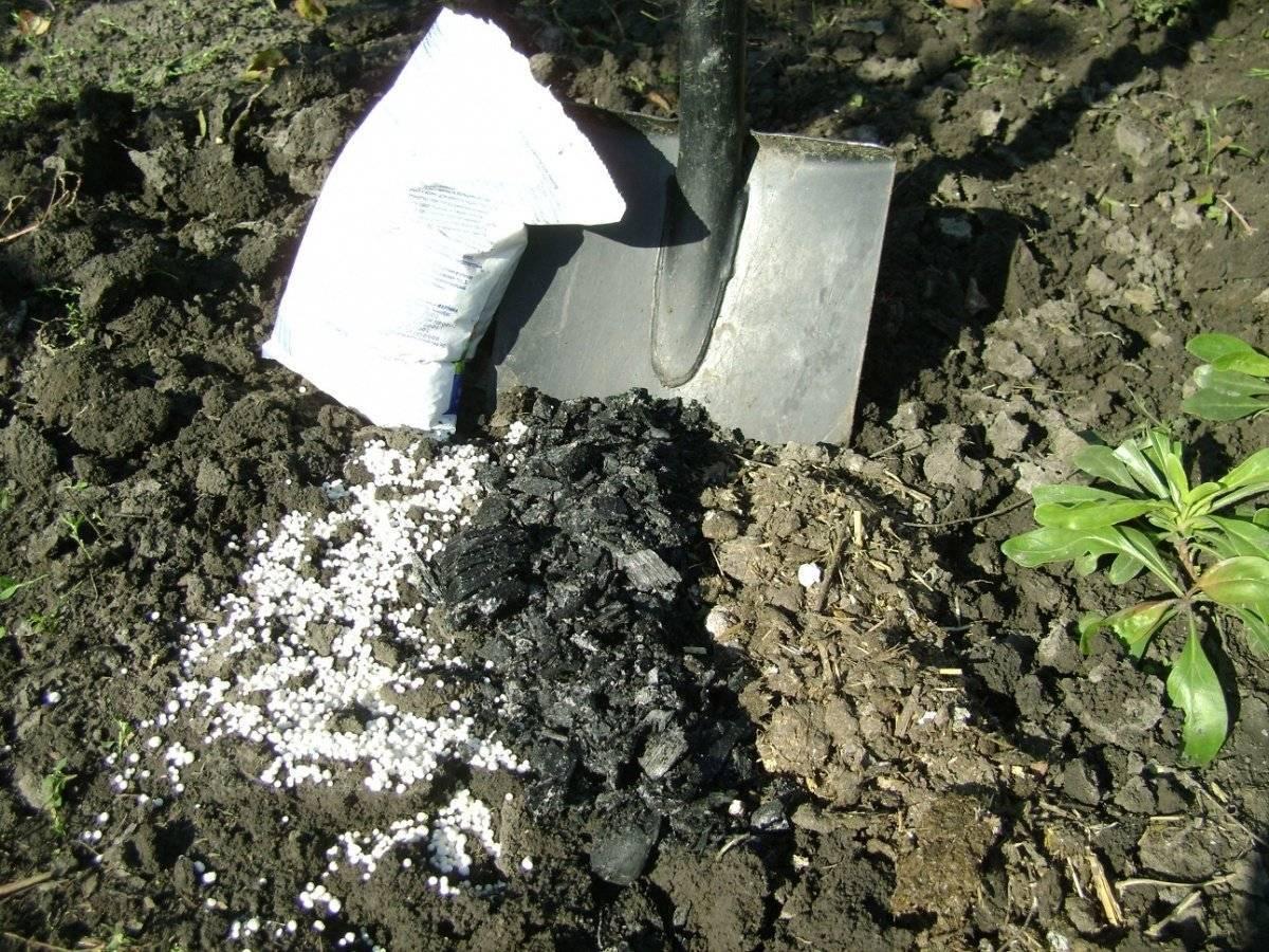 Удобрение сульфат калия - применение на огороде и саду