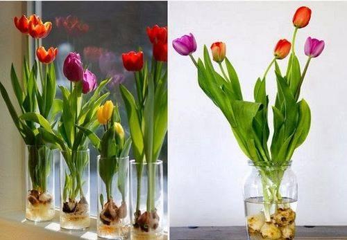 Как хранить тюльпаны: секреты флористов