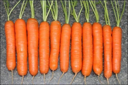 Морковь при беременности: можно ли есть в 1, 2, 3 триместре