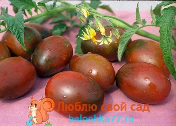 Описание сорта томата крымская ночь — что необходимо знать огороднику