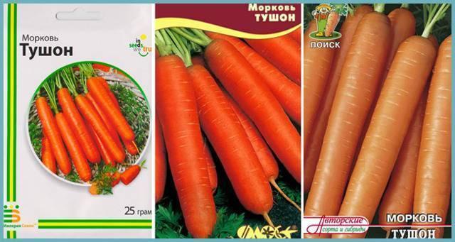Морковь тушон: описание сорта, отзывы, характеристики, фото