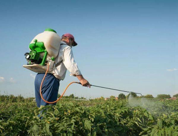 Виды подкормки картофеля, сроки внесения удобрений