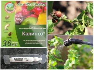 """Инсектицид """"калипсо"""": инструкция по применению"""
