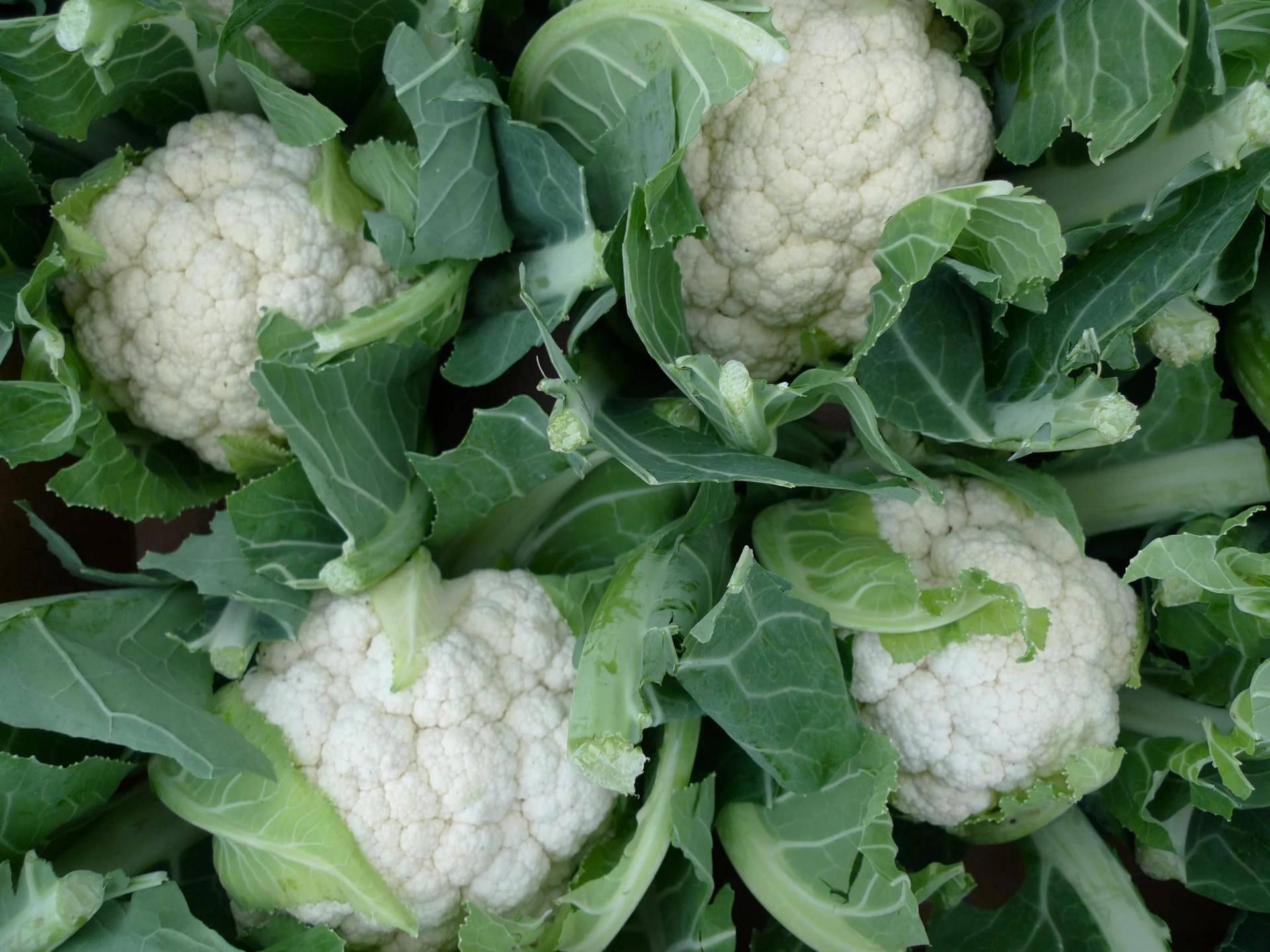 Лучшие сорта капусты цветной: описание, секреты выращивания, фото