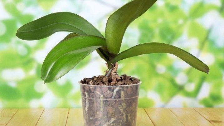 Советы, что делать, чтобы орхидея зацвела снова