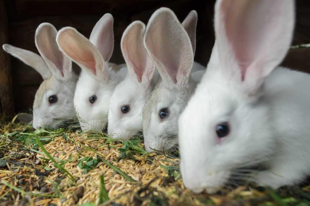 Нормы кормления кроликов в сутки на 1 голову