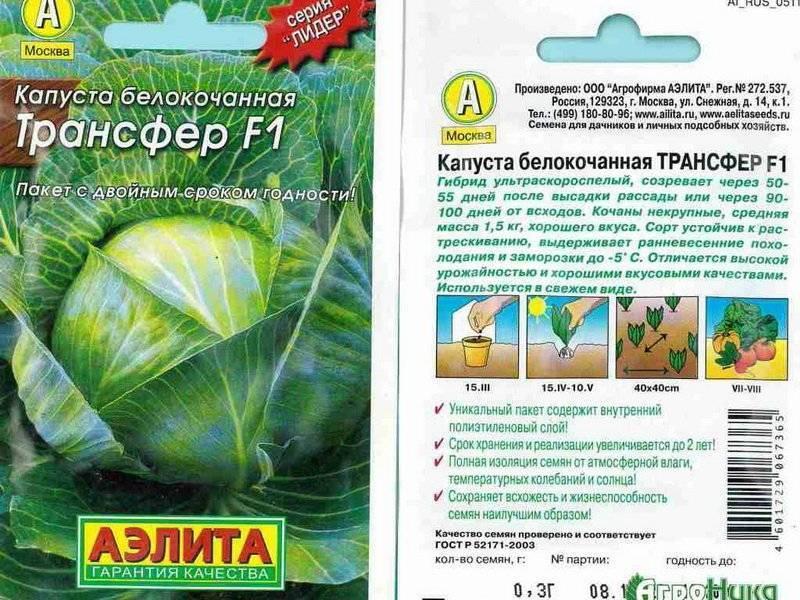Лучшие ранние сорта капусты белокочанной для россии