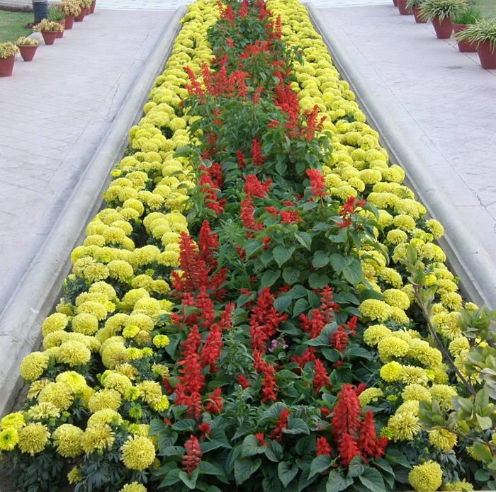 Создаем природные украшения для загородного участка: подбор растений для рабатки своими руками + схемы и фото