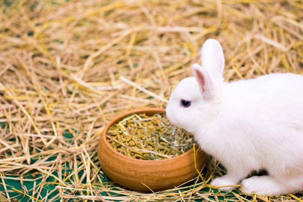 Чем кормить кролика в домашних условиях. составляем рацион