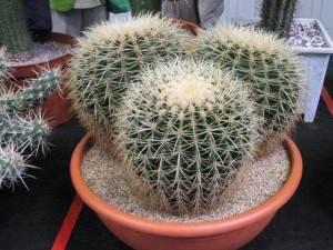 Все об уходе и размножении кактусов в домашних условиях