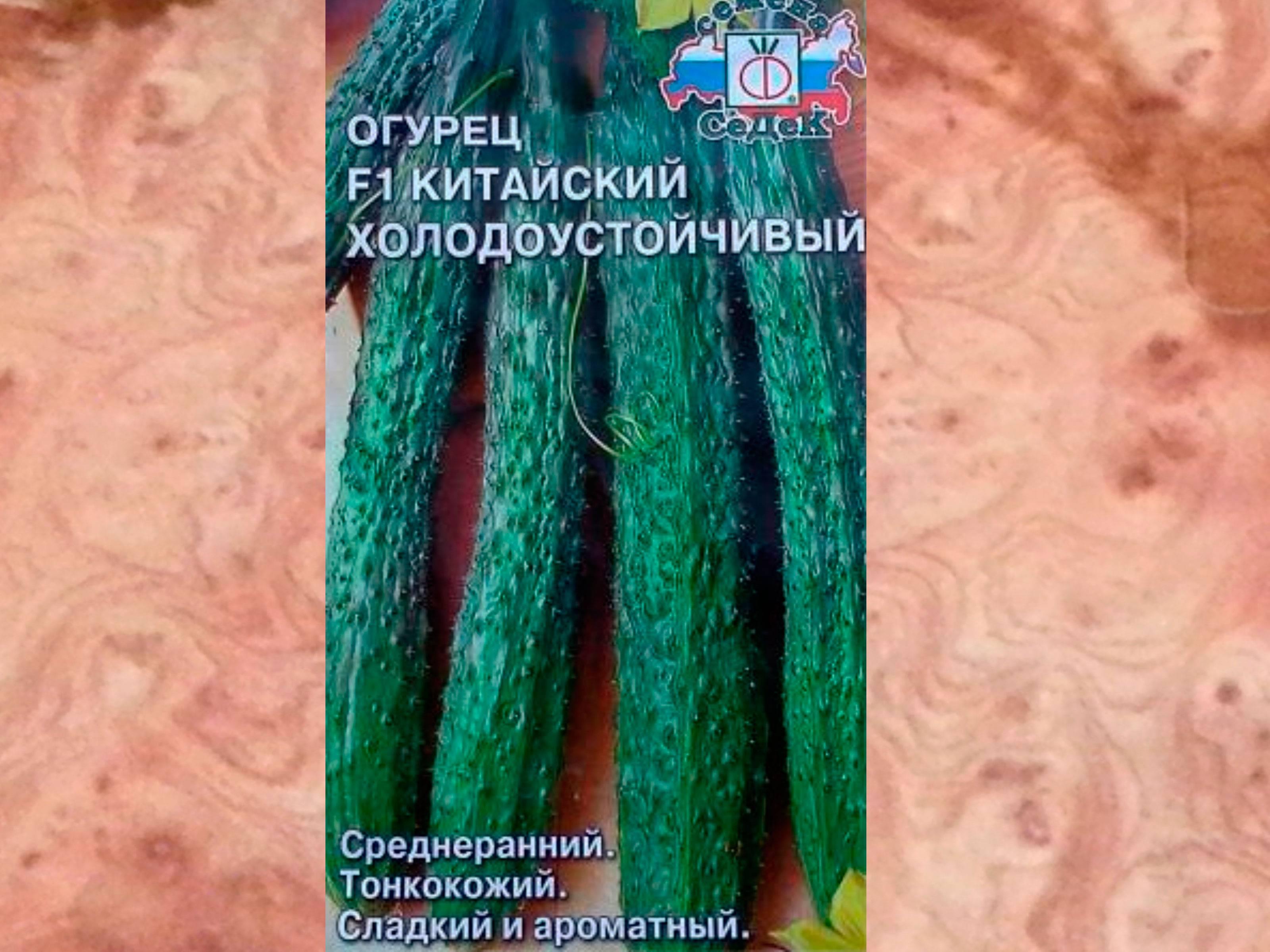 Огурец f1 китайский холодоустойчивый урожайный? / асиенда.ру