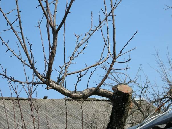 Обрезка яблони осенью: когда и как правильно ее делать, а также особенности формирования растения в данный период