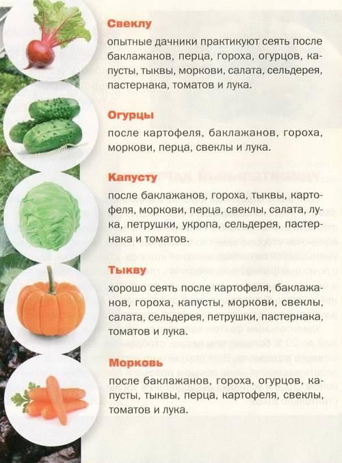 Севооборот на огороде: таблица овощных культур, фото и видео