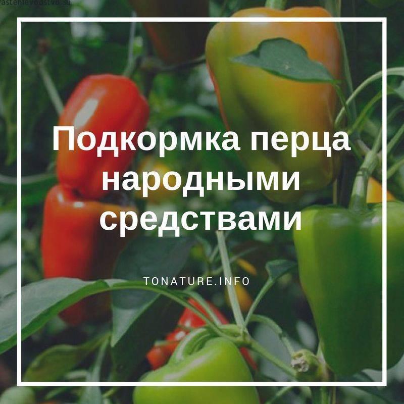 Как подкормить перец с помощью народных средств