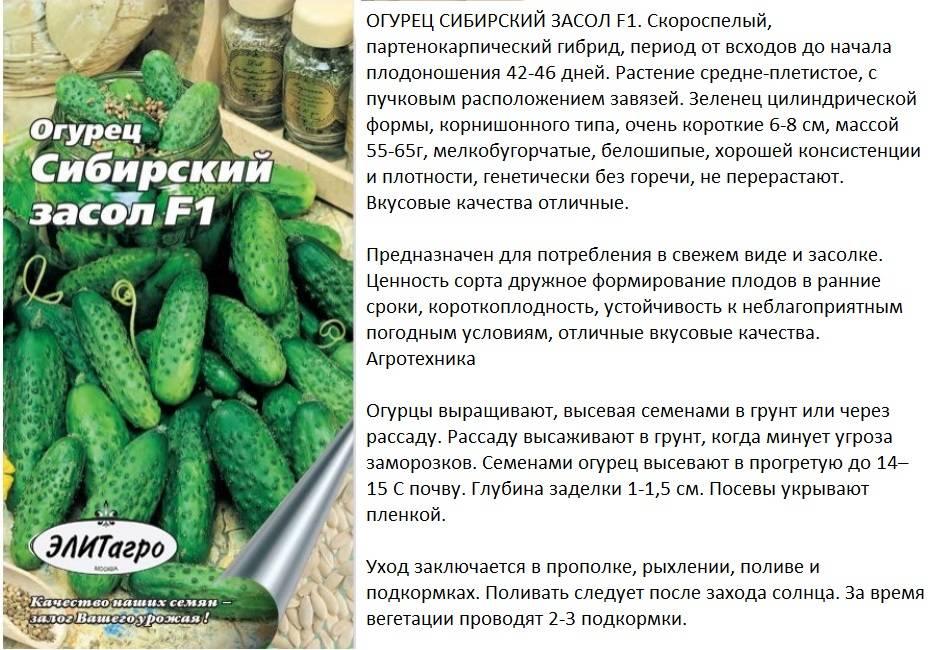 Особенности выбора лучшего сорта огурцов для засолки и консервирования