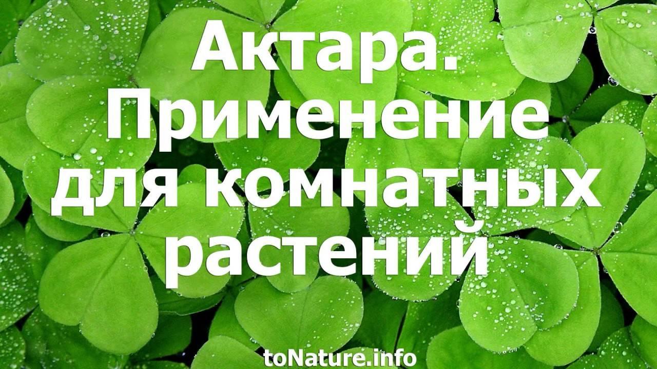 «актара» для комнатных растений: инструкция по применению. как разводить жидкую и в гранулах для разных цветов?