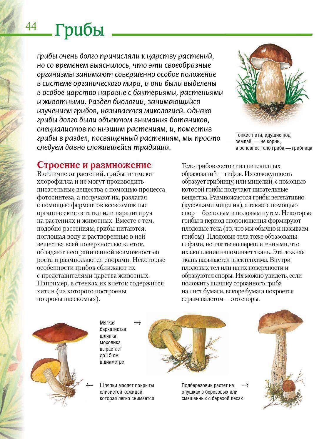 Шляпочные грибы: какое строение имеют, из чего состоит плодовое тело
