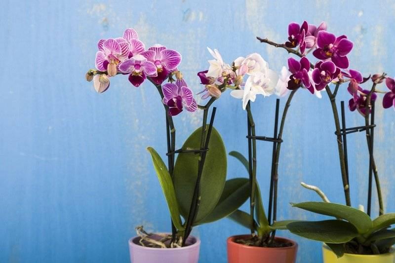 Советы, как пересадить орхидею в другой горшок после цветения