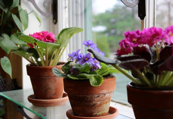 Грунт для глоксиний — какая земля подходит для цветка